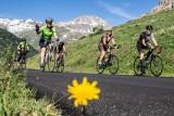 groupe-cycliste-et-pissenli-5979893